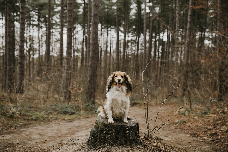 Hond fotografie