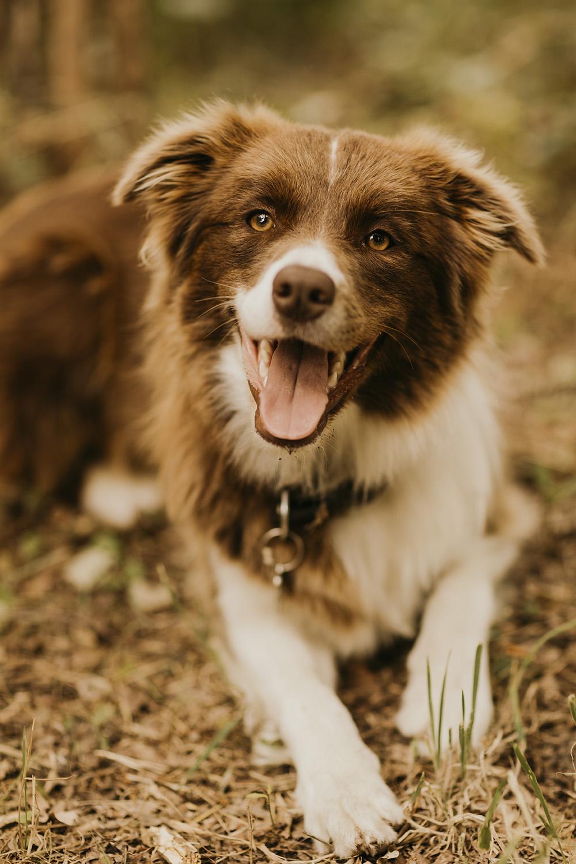dog dogphotography
