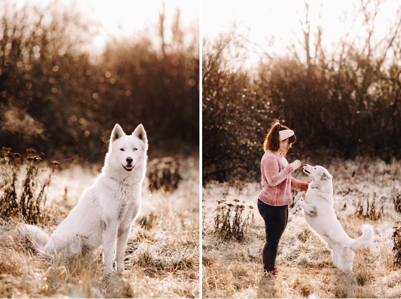 dog hond shoot