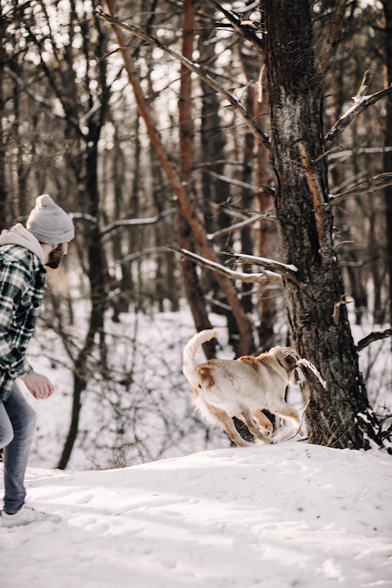 koppelsessie couple koppel hond fotografie limburg